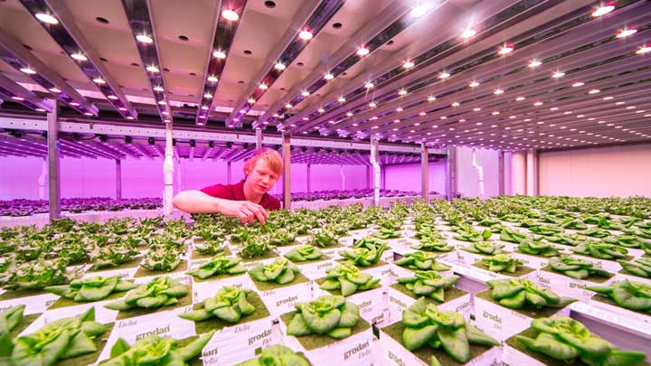 BrightBox City Farming
